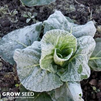 Over Winter Veg Kit Seed Deals