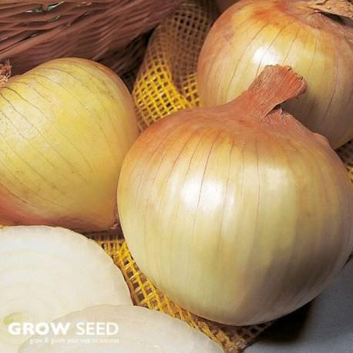 Onion (Senshyu Yellow) Set