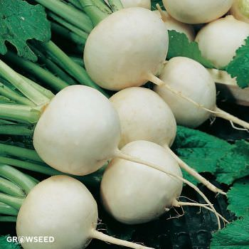 Snowball Turnip Turnip Seeds
