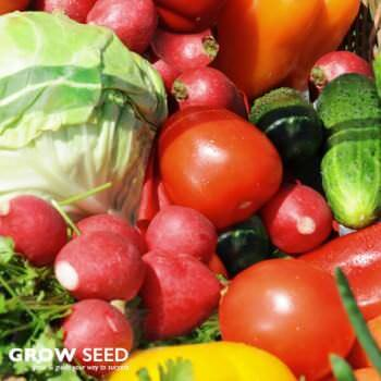 Summer Veg Kit Seed Deals