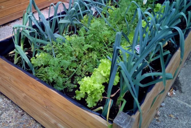 raised-bed-veg