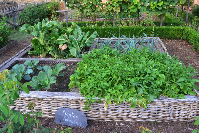 raised-beds-garden
