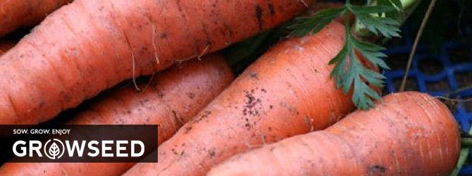 Growing Carrots Under Growlights