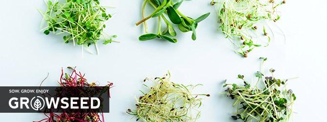 Growing Microgreens Under Growlights