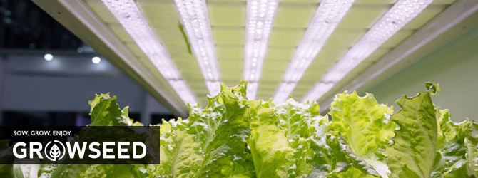 What Vegetables Can You Grow Under Lights