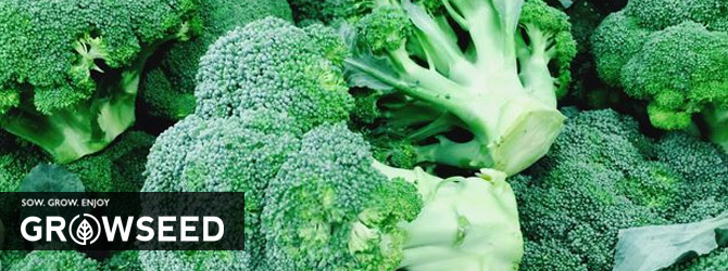 Growing Broccoli in Spring