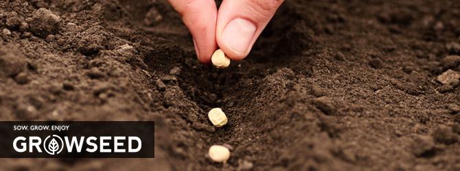 Sowing vegetable seeds in Spring