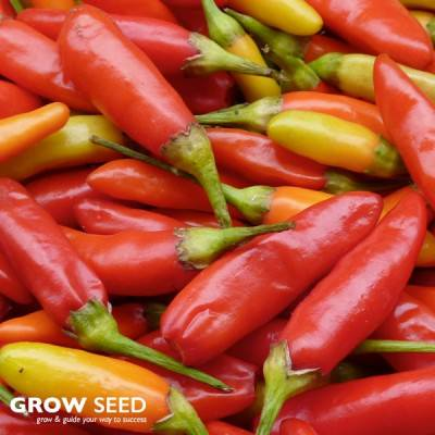 Chilli and Pepper Seeds