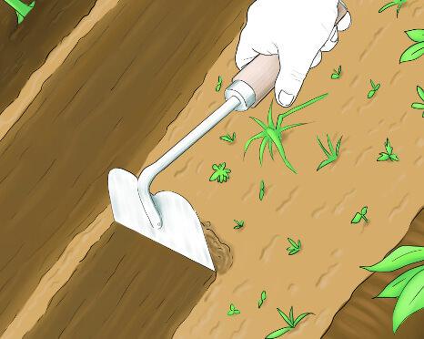 Hoe Weeding