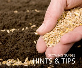 Hints, Tips and Growing Info